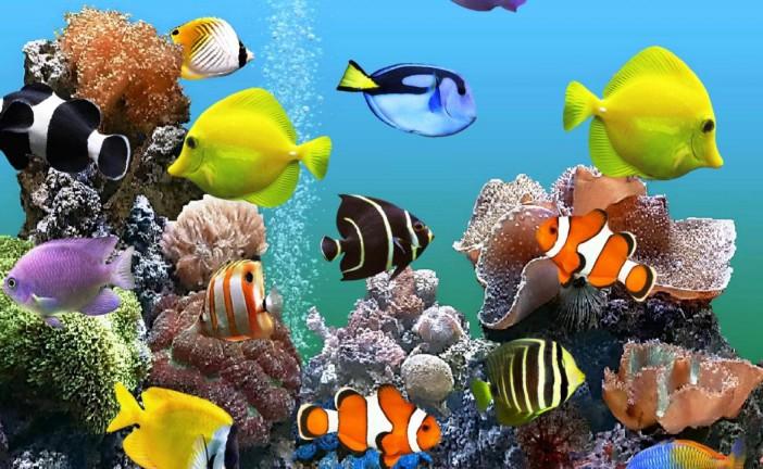 Le premier aquarium d'Israël ouvrira prochainement ses portes au zoo biblique de Jérusalem