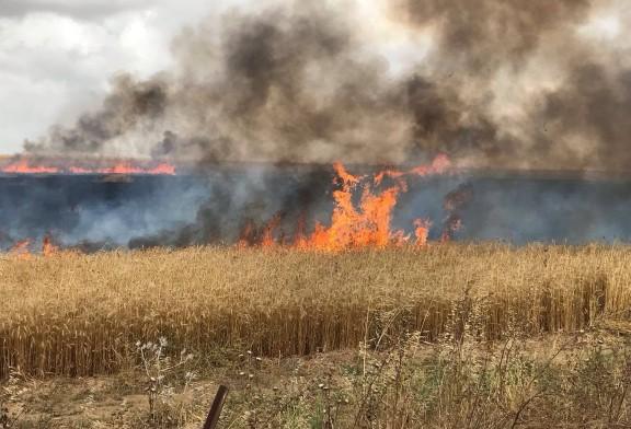 Gaza/Israël: près d'une vingtaine d'incendies déclenchés dans le sud, l'armée riposte
