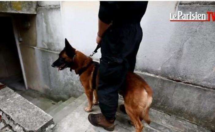 VIDEO.  Diesel, la chienne du Raid tuée dans l'assaut à Saint-Denis