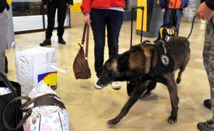 Un touriste français arrêté avec 20 grammes de haschischs à l'aéroport d'Ovda près d'Eilat.